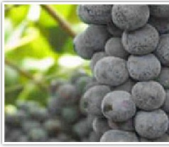 Agro Genesis Pte Ltd Photos