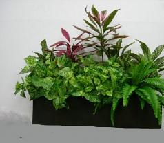 Plant Creation Photos