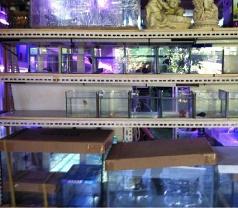 Betta House Aquariums Photos