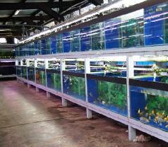 Nanyang Trading Aquarium Pte Ltd Photos