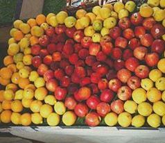 The Organic Grocer Photos