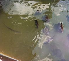 Changi Fishery Kelong Photos