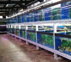 Nanyang Trading Aquarium Pte Ltd Photos