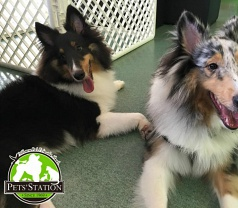 Pets' Station Holding Pte Ltd Photos