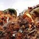 Copper Scrap metals